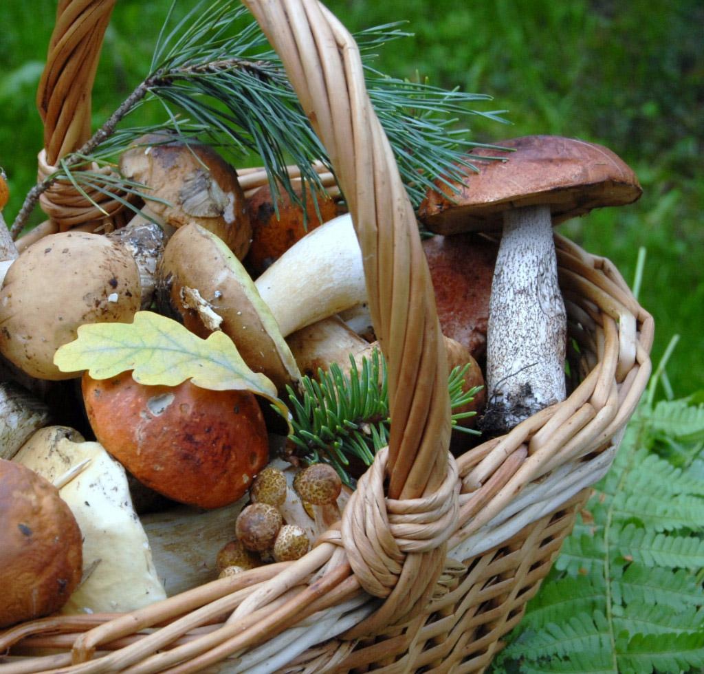 Champignons adoptez les bons r flexes flordaki - Calendrier des champignons comestibles ...