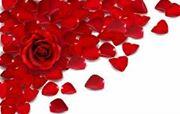 petales_de_rose_rouge