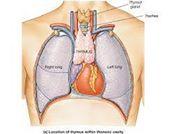 Thymus (organe)